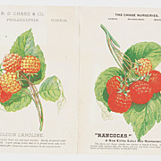 c1885 Color Advertising Trade Card for Raspberries