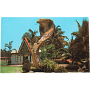 SALE Entrance to Miami Serpentarium Vintage NOS New Old Stock Postcard