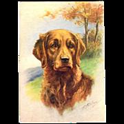 Golden Retriever dog embossed Postcard