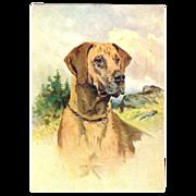 Great Dane dog embossed Postcard