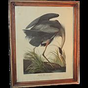 Framed J J Audubon Great Blue Heron Plate Engraving