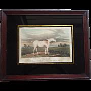 """Aquatint Horse Print  """"Claret"""" - Field Hunter 1822"""