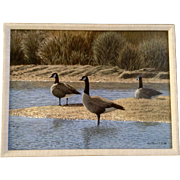 Photo Realism R J Miller Audubon Acrylic Painting Geese by River Art Picture