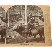 American Indian Stereoscope Card 1897 - # 4004 On the War Path