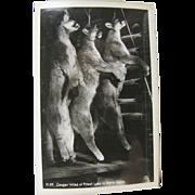 RPPC, hunting ca.1920's, three cougar, log cabin, Priest Lake Idaho.