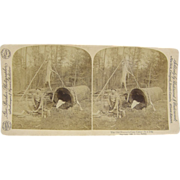 =RARE= 1893 Antique stereoview by Barker, deer hunting camp in a log