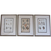 "REDUCED Vintage French Shell Prints-""Mollusques""-Set of 3"