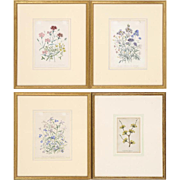 Set of Four Beautiful Antique Botanical Floral Illustration Lithographs Hand-Colored Framed in