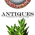 Antiques @ Nesting in the Desert