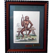 SOLD 18th Century HC Engraving of an Orangutan by George Edwards