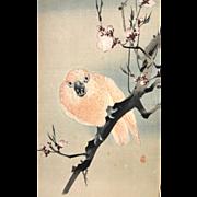Japanese watercolor, Fierce Parrot in Plum Tree, early 20th century