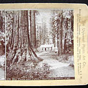 Big Trees Mariposa Grove California Stereoscopic Card