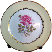 Prettiest PorcelainTuscan Pattern Bread & Butter Plate by Dovedale