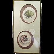 SALE Twin Signed Original Watercolor Sea Shell Studies