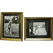 SALE Adorable Pair of Framed Photographic Prints of Dogs after Eliot Erwitt