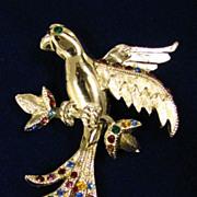 Judy Lee Vintage Rhinestone Parrot Brooch