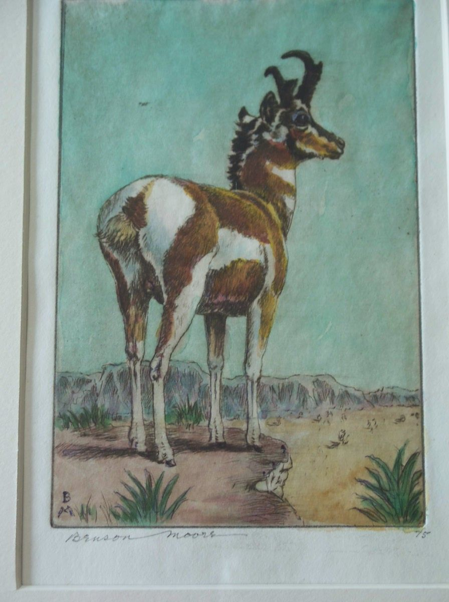 Pronghorn Antelope,Original etching,listed