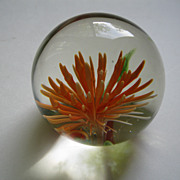 Vintage Sea Anemone Paperweight