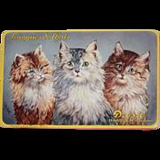 REDUCED Old Cat Kitten Tin Droste Haarlem Holland Metal Portrait Box