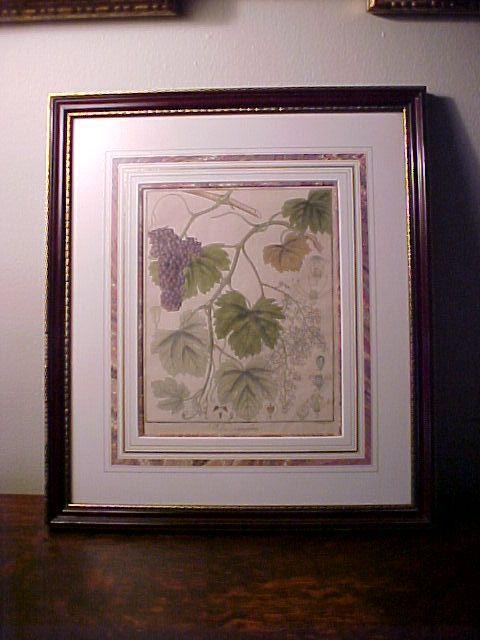 Framed Antique Copperplate Botanical Engraving Wine Grapes 1813 Berlin