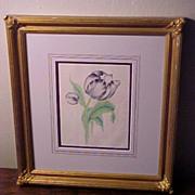 19 C. Framed Original Antique Watercolor Botanical Painting Parrot Tulip