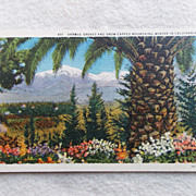 WINTER IN CALIFORNIA Vintage Estate Unused Postcard