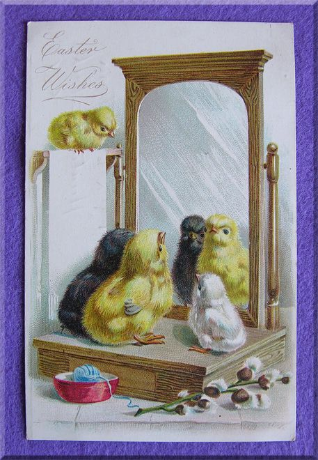 RAPHAEL TUCK Signed Antique CHICKS Looking in Mirror Postcard