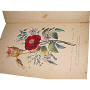 1859 The Language of Flowers  Henreitta Dumont colured Plates Free P&I US Buyers