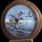 Canvasbacks Breaking Away Ducks Unlimited Framed Porcelain Plate