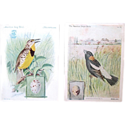 Singer Vintage Advertising Trade Cards with Birds, signed J. L. Ridgway