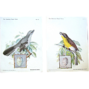 """Song Birds on Vintage """"American Singer Series"""" Trade Cards"""