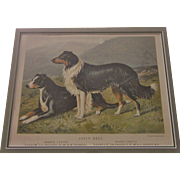 """CHROMOLITHOGRAPH OF """"SHEEP DOGS"""" FROM CASSELL'S ILLUSTRATED BOOK OF THE DOG"""