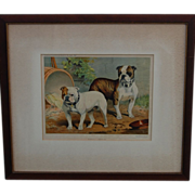 """SALE Cassell's Book of the Dog, Bulldog Print """"Smasher"""" and """"Doon Brae"""""""