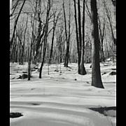 SALE Original 'Winter in the Woods' B/W Art Photograph 8x10