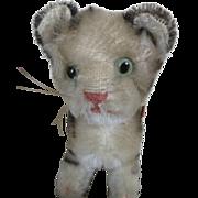 Vintage Steiff Kitten with Sweetest Face