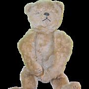 "SALE Antique Steiff Bear 18"" tall 1900-1915"
