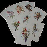 """John Gould """"BIRDS IN COLOR"""" Vintage Fine Art Prints - Complete"""