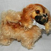 Vintage Steiff Pekingese Mohair Dog with Raised Script Button