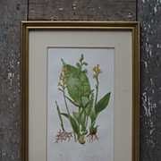 Pair of Framed Vintage Botanical Prints