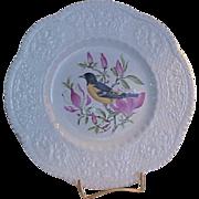 Royal Cauldon Aviary Baltimore Oriole Luncheon Plate