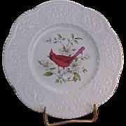 Royal Cauldon Aviary Cardinal Luncheon Plate