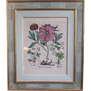 SALE Early 17th Century Botanical Print with hand coloring by Basil Besler RARE