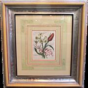 SALE Original 18th Century Maria Sibylla Merian Botanical Print with hand coloring