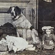 SALE PENDING 1902 Stereoview Photo, St. Bernard Sits Watch Over Sleeping Child & Jumeau Doll