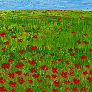 Red Poppies Italian landscape oil painting by Fallini