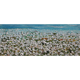 Unique Louisiana cotton field highly textured painting by Fallini