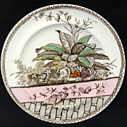 SALE Polychrome Aesthetic BROWN Transferware Plate ~ BRAZIL 1885