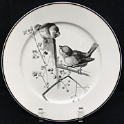 SALE Pierre Mallet Brown Transferware ORNITHOLOGY Plate ~ 1870 #A