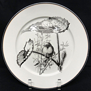 SALE Pierre Mallet Brown Transferware ORNITHOLOGY Plate ~ 1870 #B