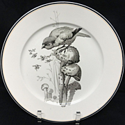 SALE Pierre Mallet Brown Transferware ORNITHOLOGY Plate ~ 1870 #F